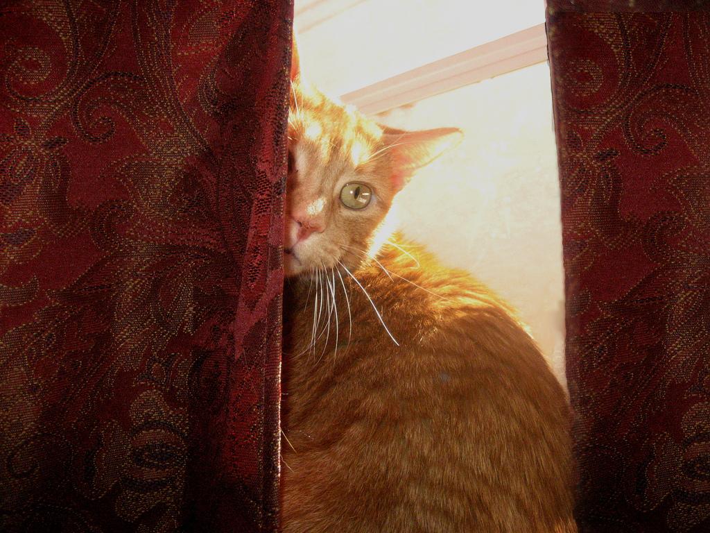 Peering Lacey