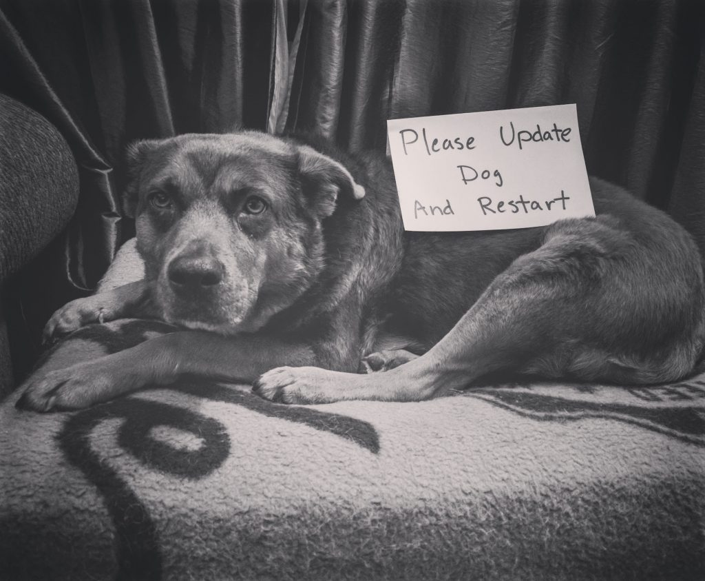 update-dog